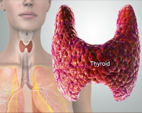 Thyroid Investigations